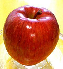 りんごから酵母?